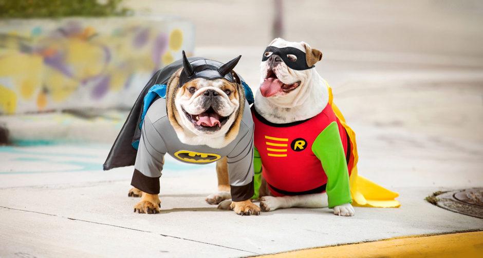 Halloween Costumes For English Bulldogs 2020 Dog Superhero Costumes: Halloween Costumes for Canine Crimefighters