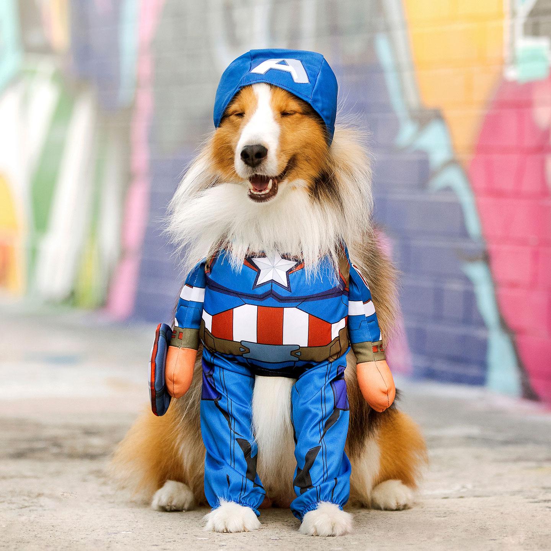 Dog Superhero Costumes Halloween Costumes For Canine Crimefighters Dongsheng the avengers captain america keychain dog tag key rings marvel comics superhero keyring chaveiro car keychain holder. dog superhero costumes halloween
