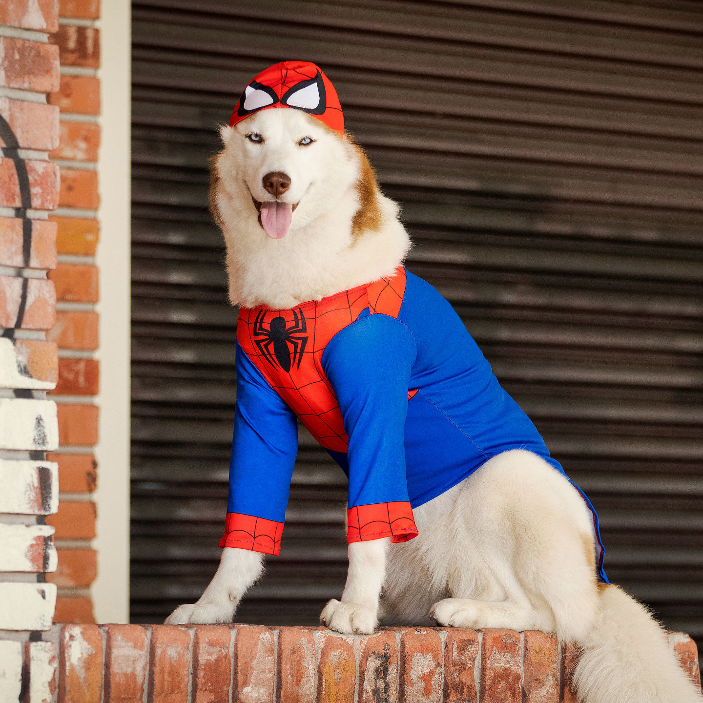 Dog Superhero Costumes Halloween Costumes For Canine Crimefighters These amazing avengers costumes and accessories will have you ready for the movies of phase 4. dog superhero costumes halloween