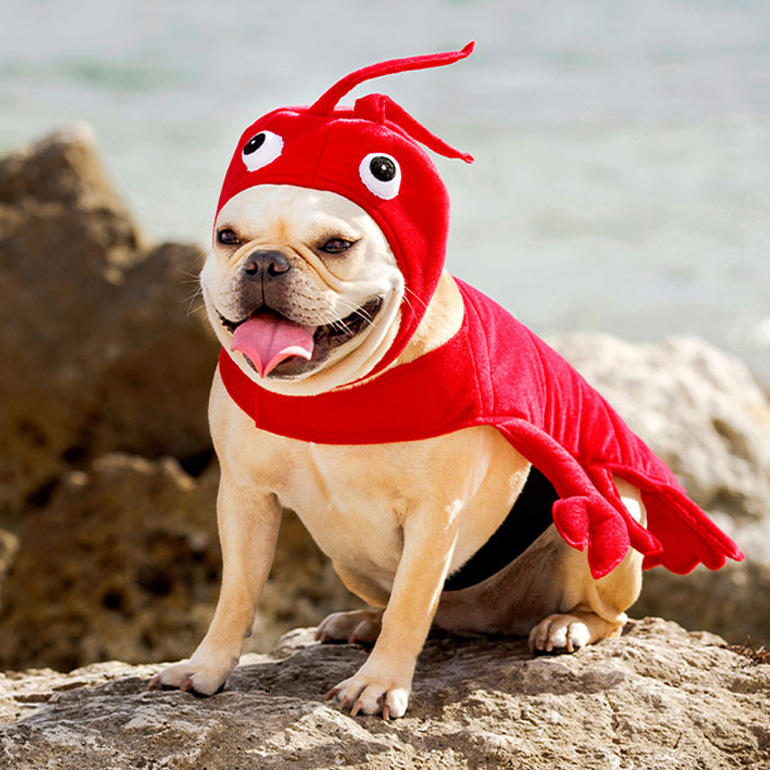 Animal halloween costumes for dogs