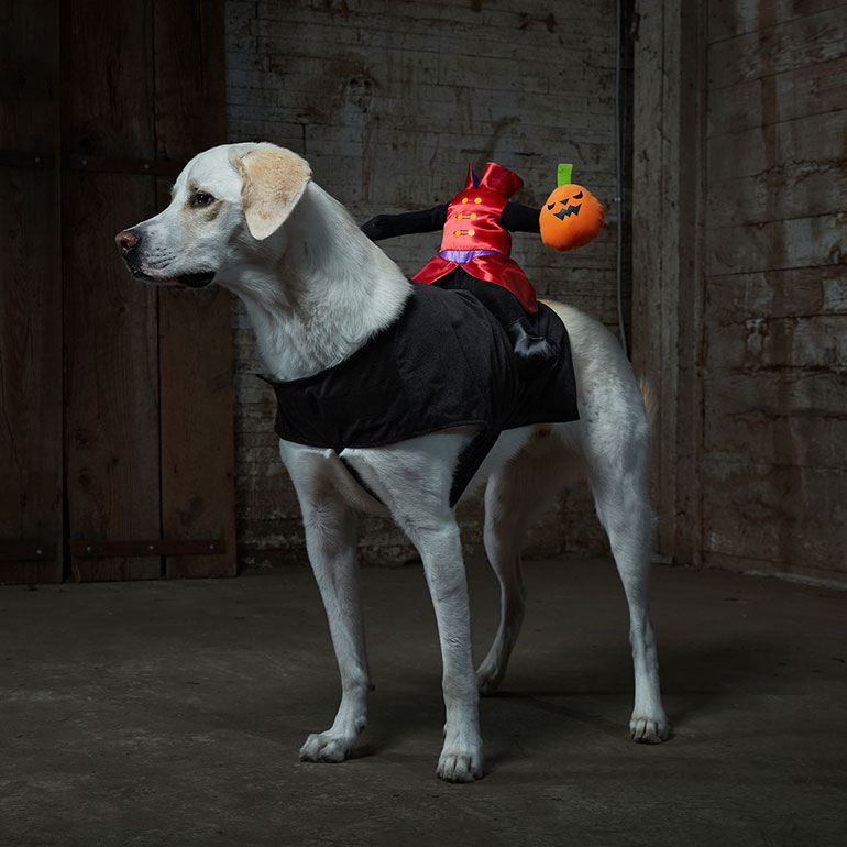 scary dog costume headless horseman costume for dogs