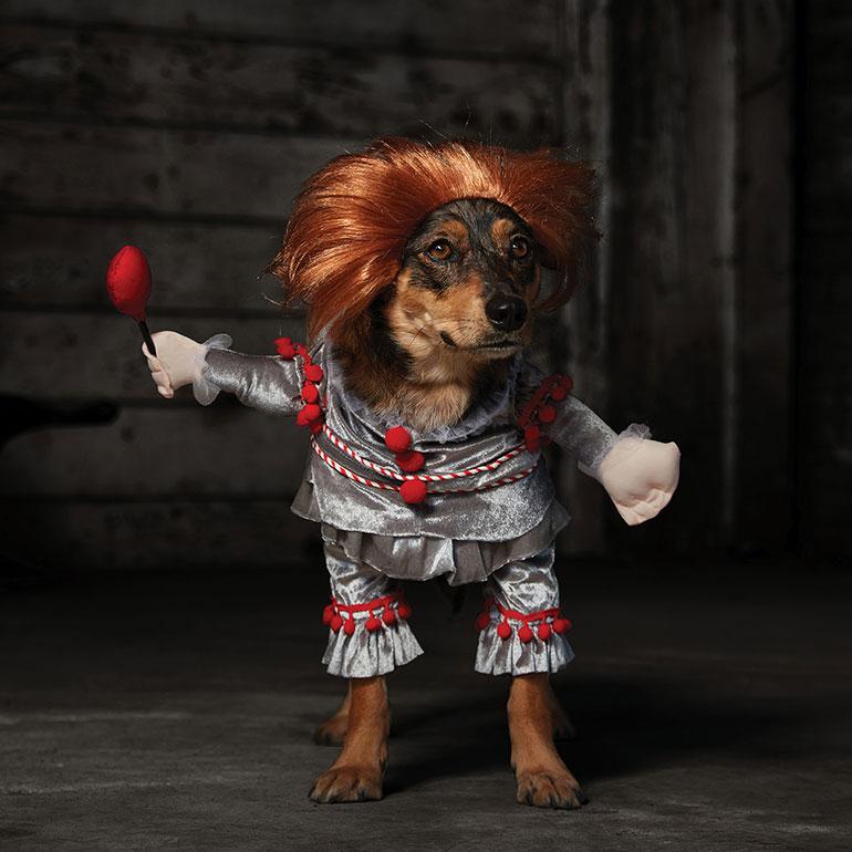 scary dog costumes - Pennywise dog costume
