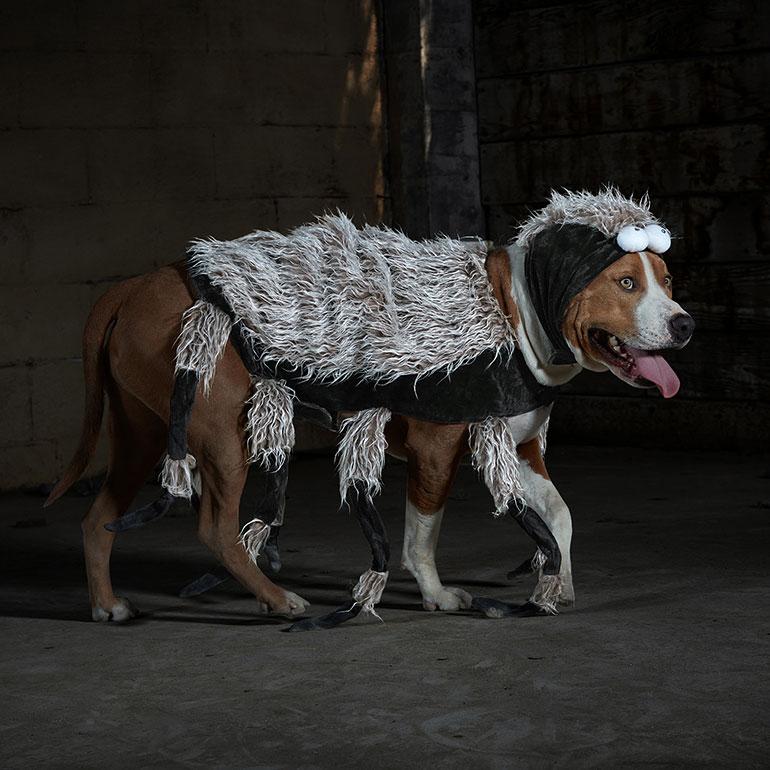 scary dog costumes - dog spider costume