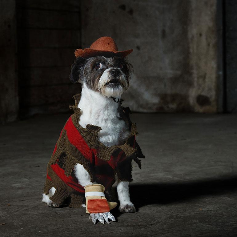 Scary dog costumes - Freddy Krueger Dog Costume