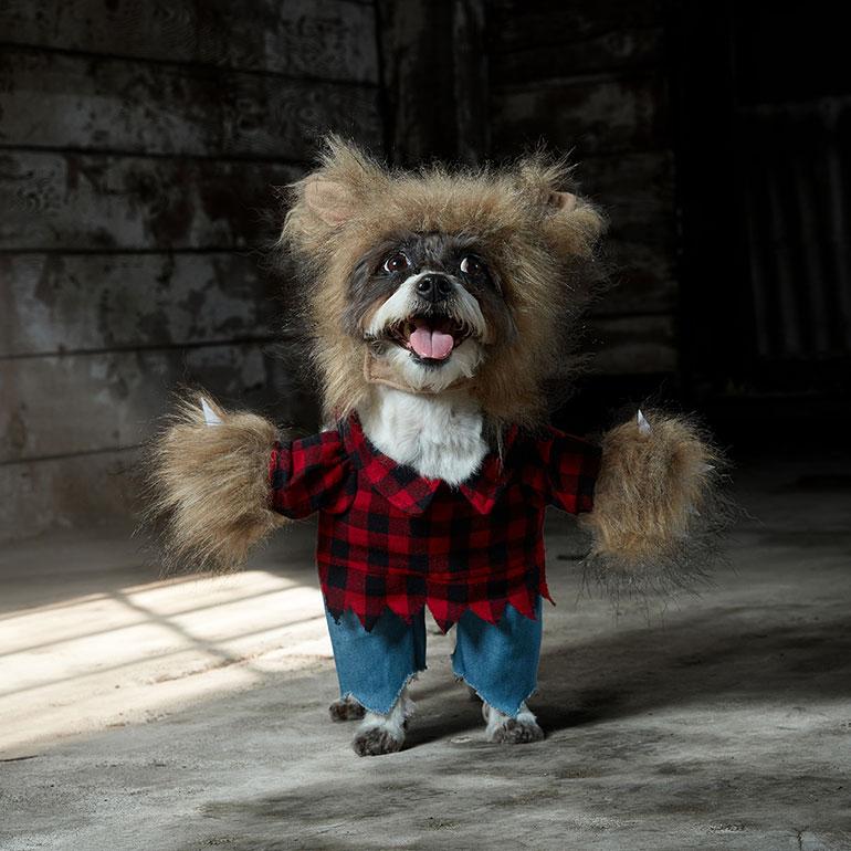 scary dog costume - dog werewolf costume