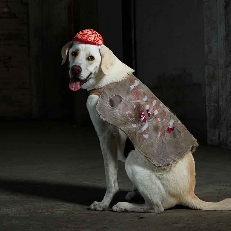 scary dog costume - zombie dog costume