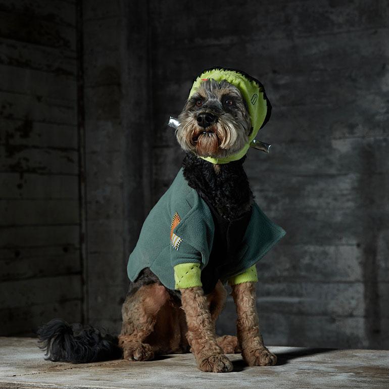 scary dog costume - Frankenstein Dog Costume