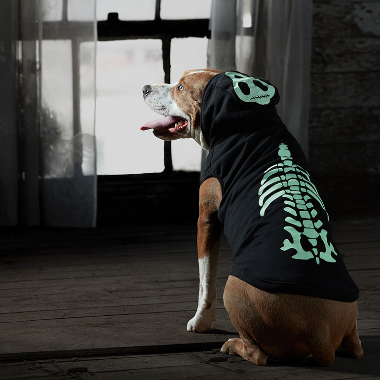 scary dog costumes - Dog Skeleton Costume