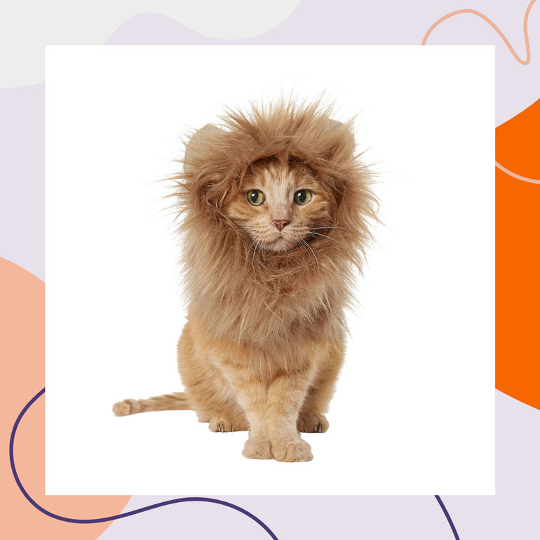 pet halloween costumes - cat lion mane costume for cats -