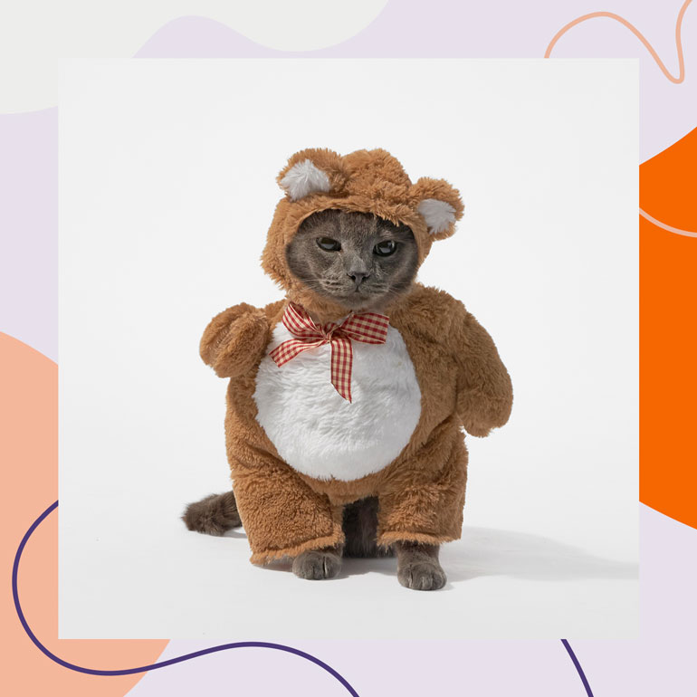 cute Halloween costumes for cats - teddy bear