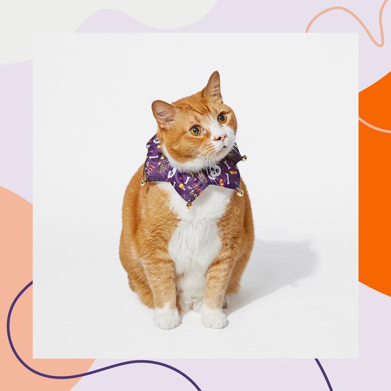Halloween Cat Collars