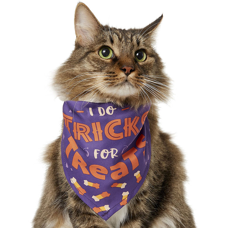 cat halloween accessories bandana tricks