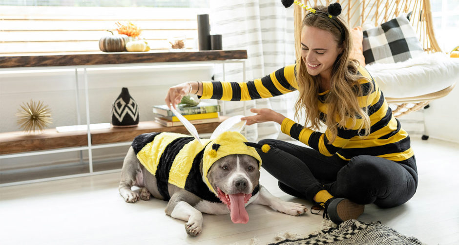 5 Diy Halloween Costumes For Dogs Cats And Their Owners