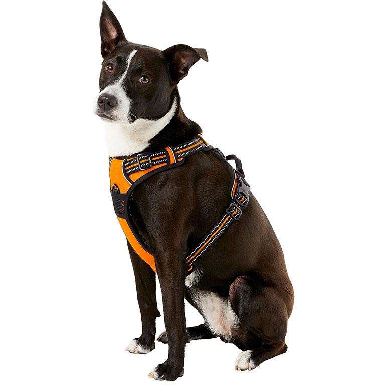 dog hiking gear - dog hiking harness
