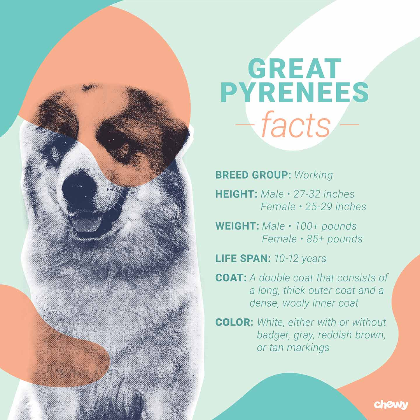 Great Pyrenees Dog Breed Facts Temperament And Care Info
