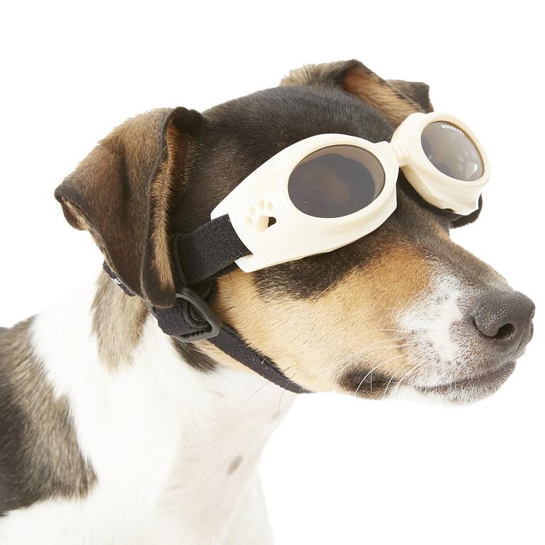 Dog goggles