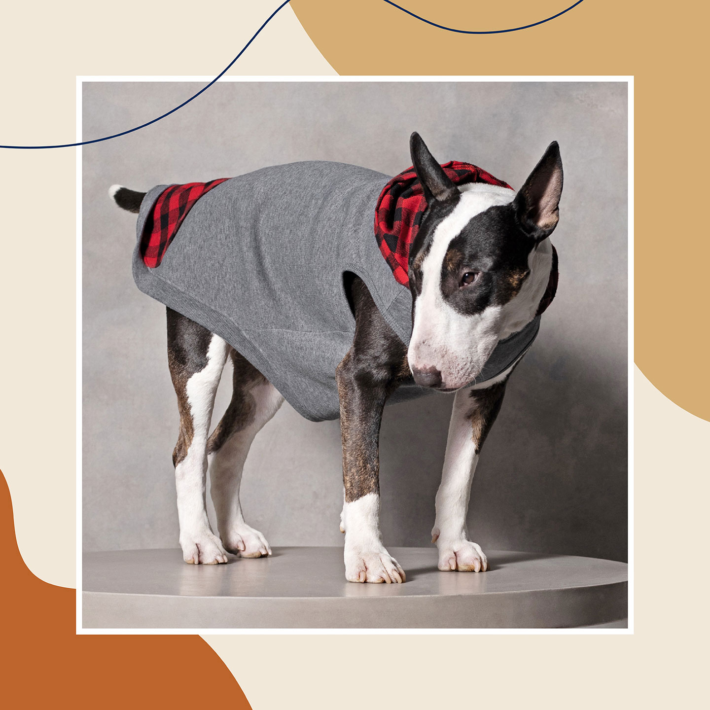 cute dog clothes - dog hoodies