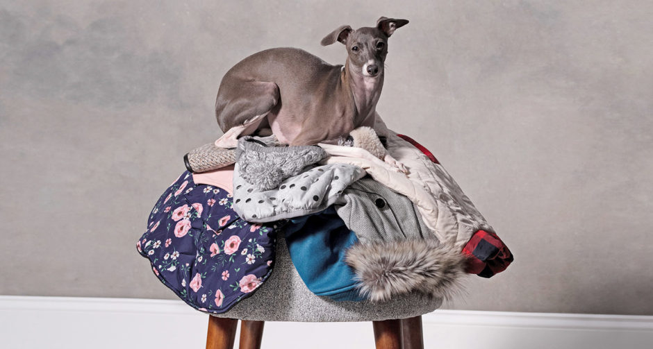 Fashion for Dogs