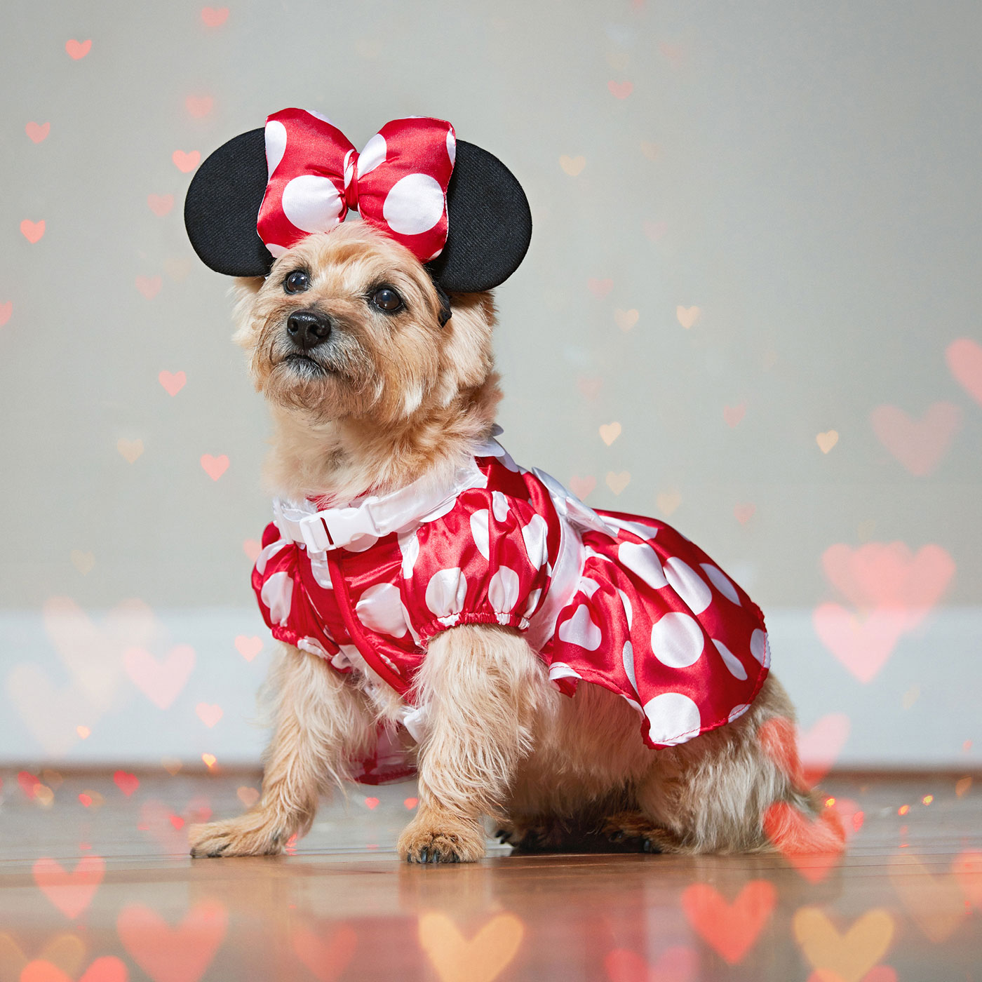 disney dog costumes - minnie mouse