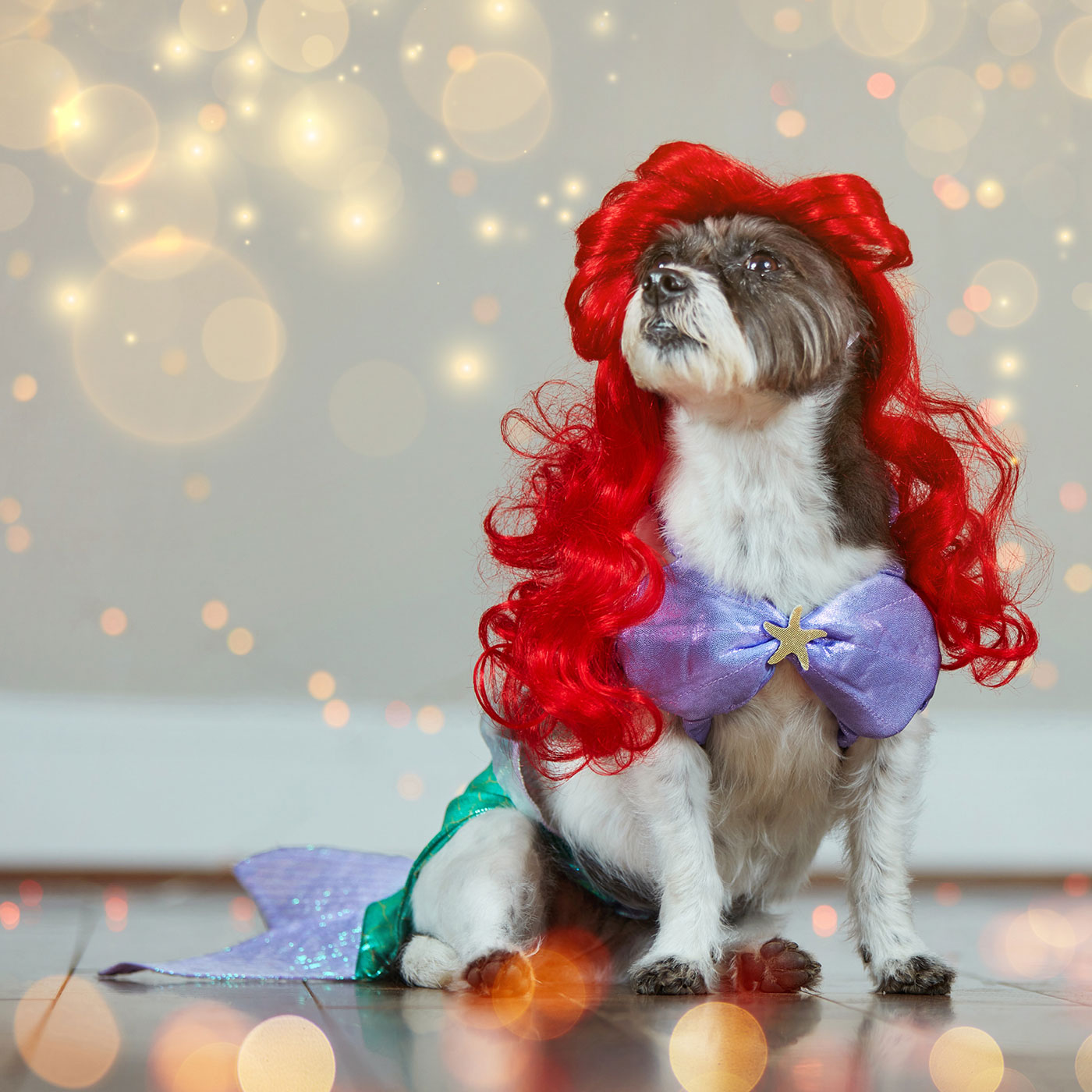 dog disney costumes - ariel dog costume from The Little Mermaid