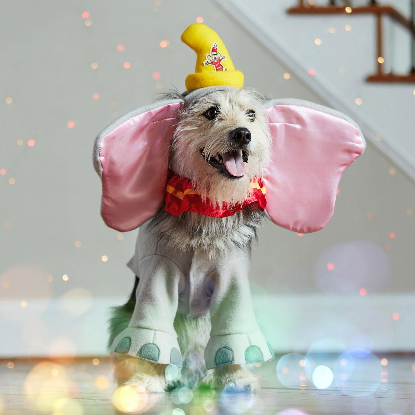 diesny dog costumes - dumbo