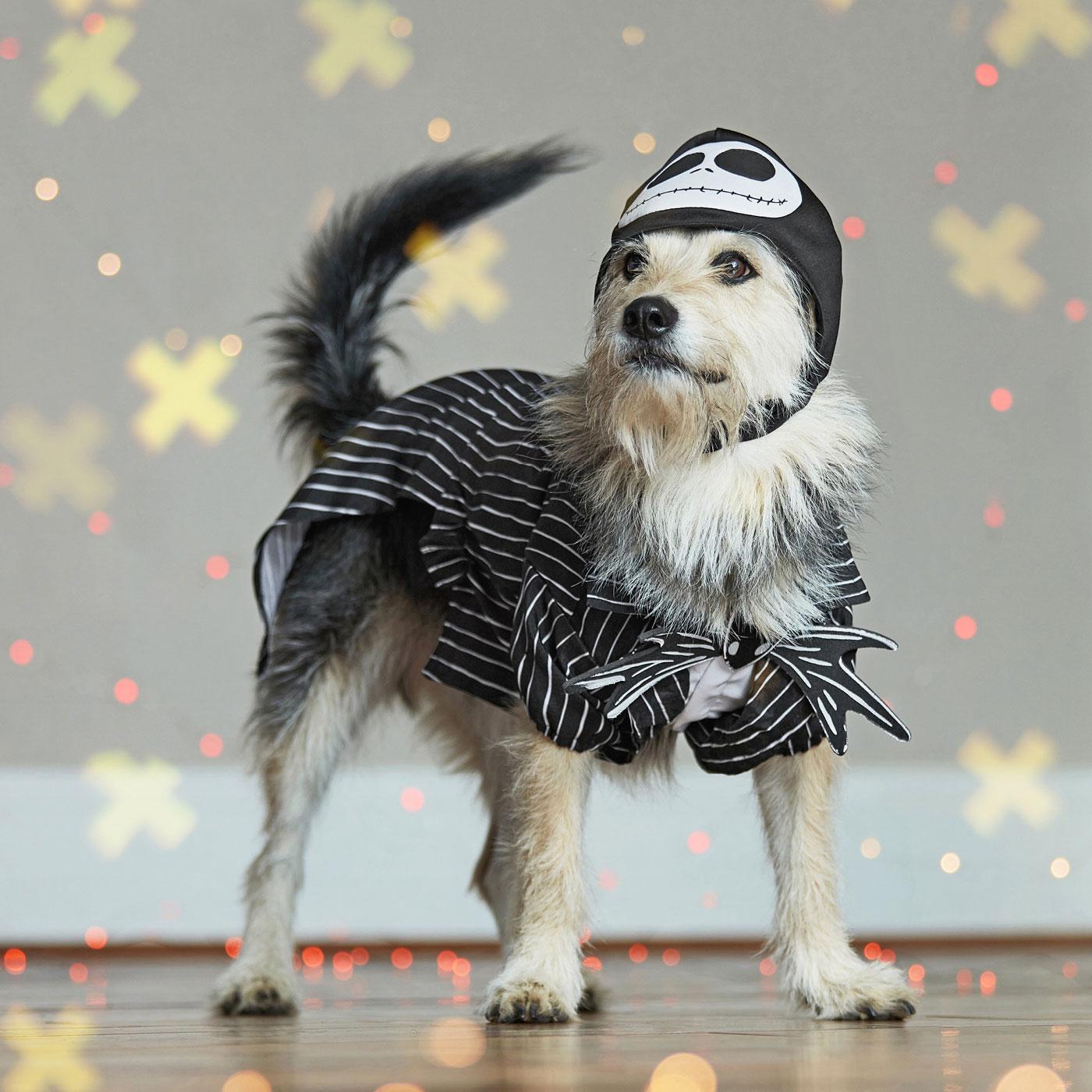 disney dog costumes - jack skellington from nightmare before christmas