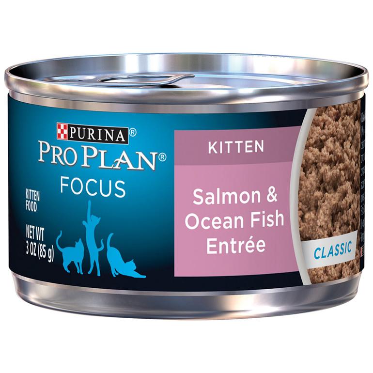 Purina wet kitten food
