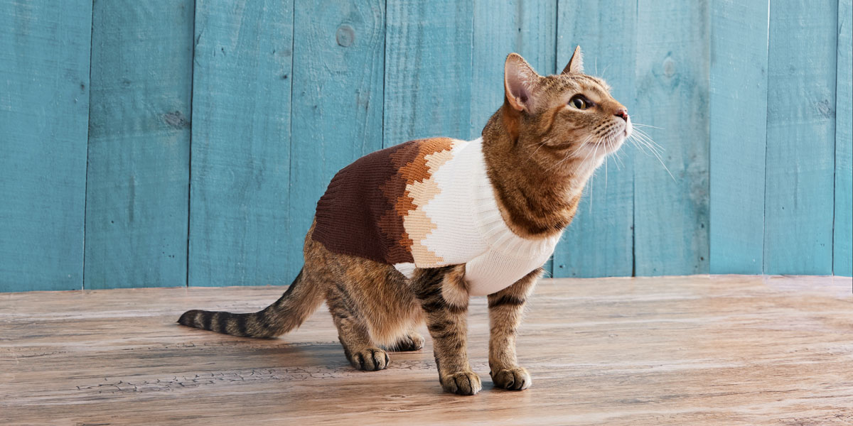 fashion for dogs and cats - sweaters