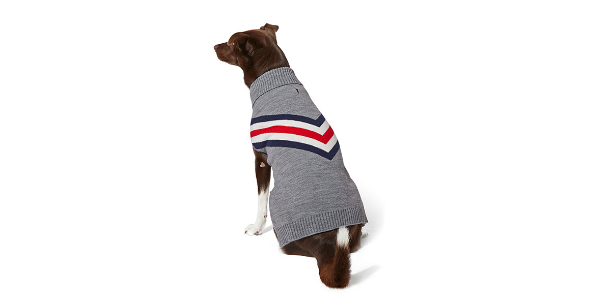 fashion for dogs and cats - chevron sweater