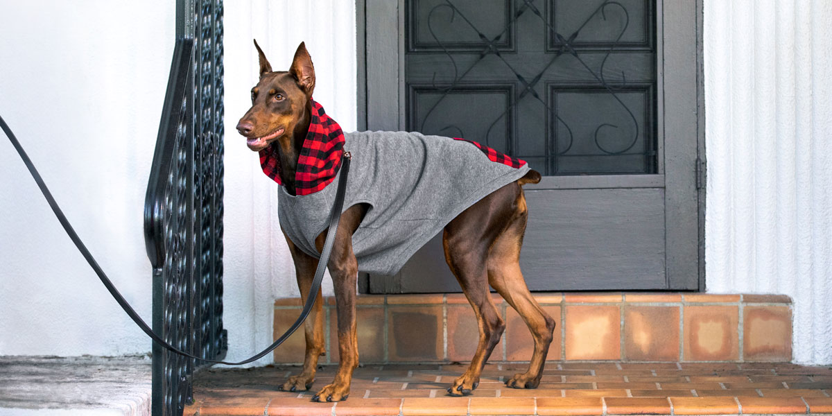 fashion for dogs and cats - hoodies