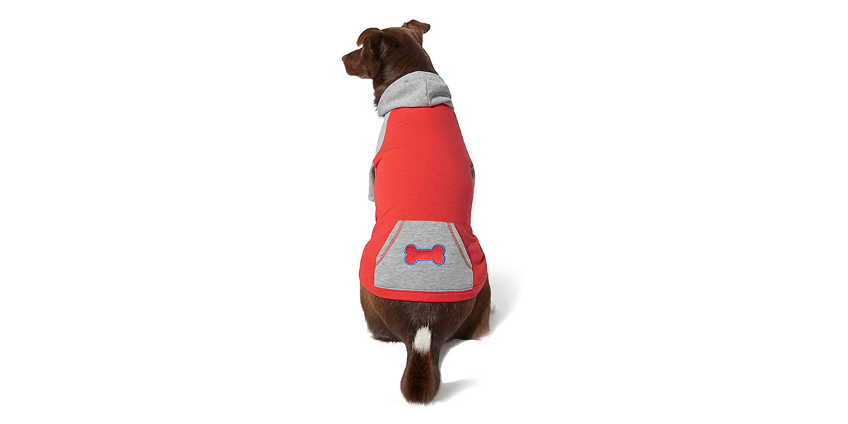 fashion for dogs and cats - raglan hoodie