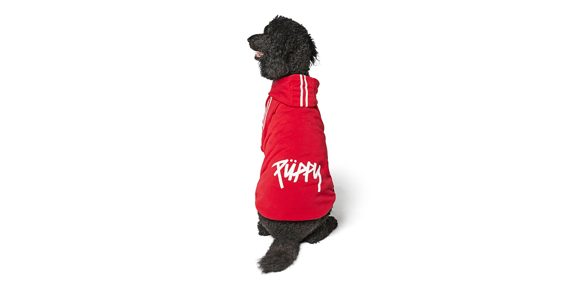 fashion for dogs and cats - skater hoodie