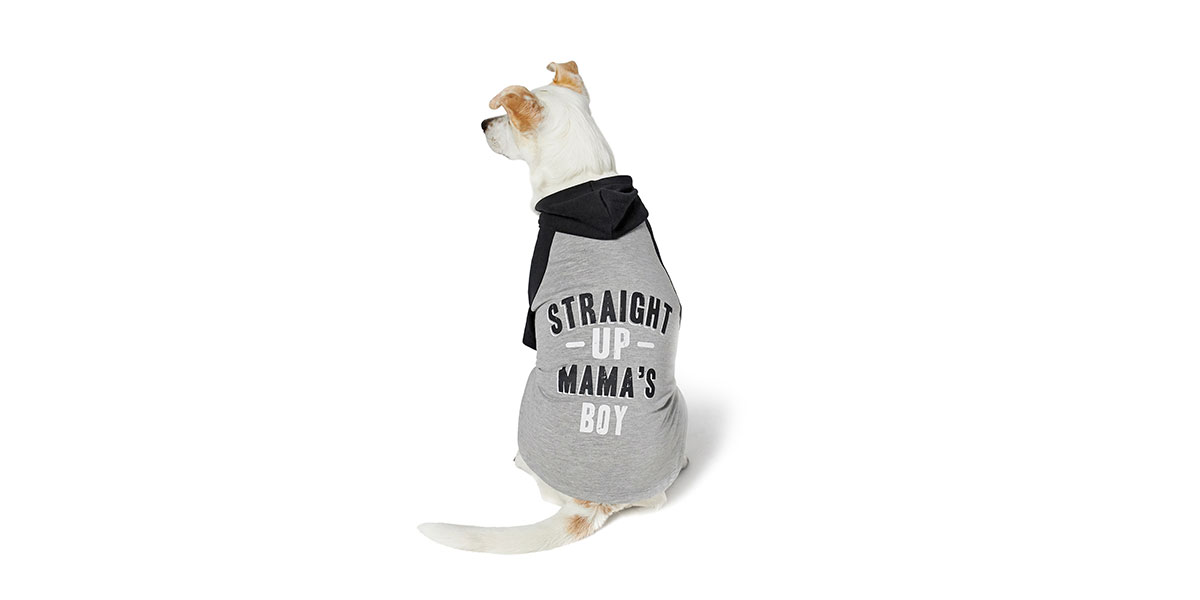 fashion for dogs and cats - mama's boy hoodie