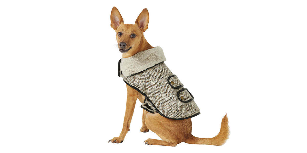 fashion for dogs and cats - tweed jacket