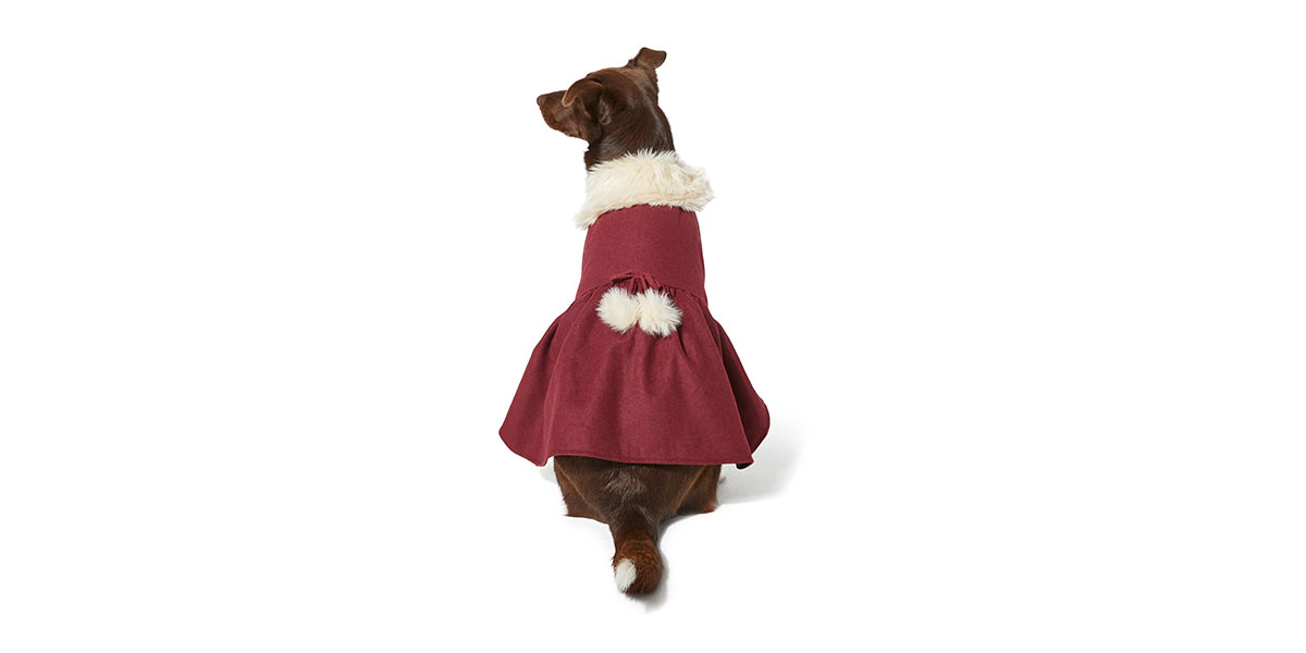 fashio for dogs and cats - pom jacket