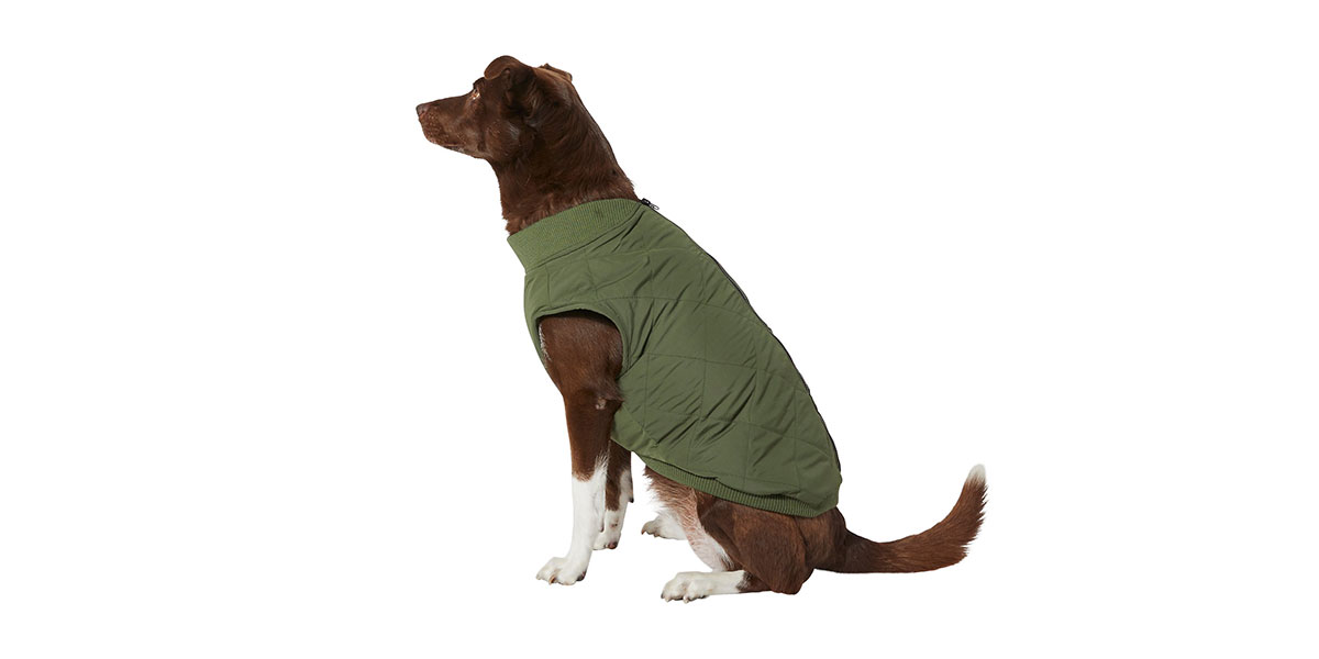 fashion for dogs - bomber jacket