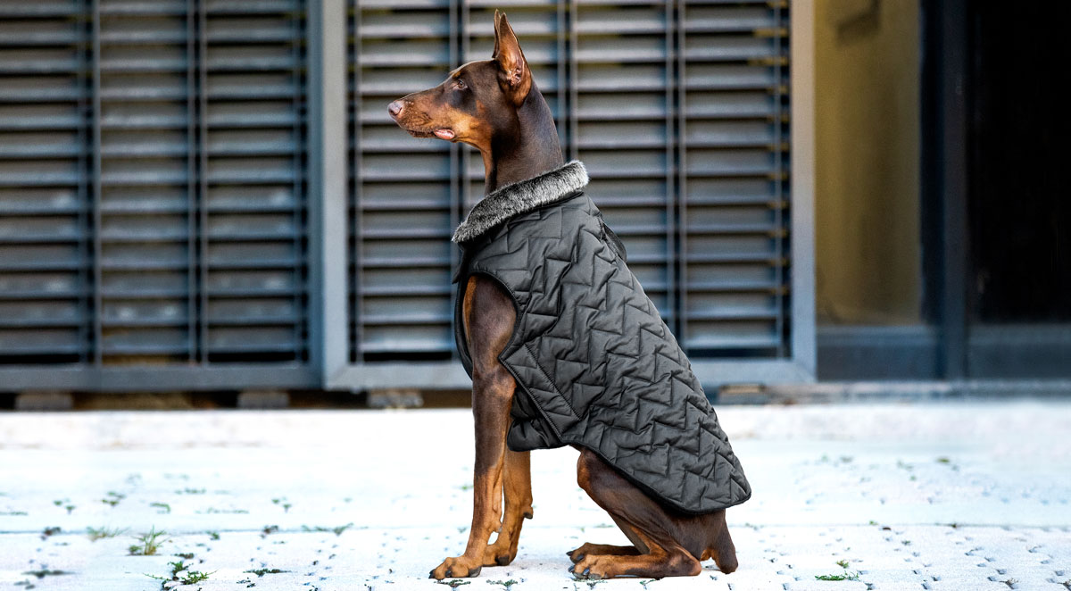 fashion for dogs and cats - coats