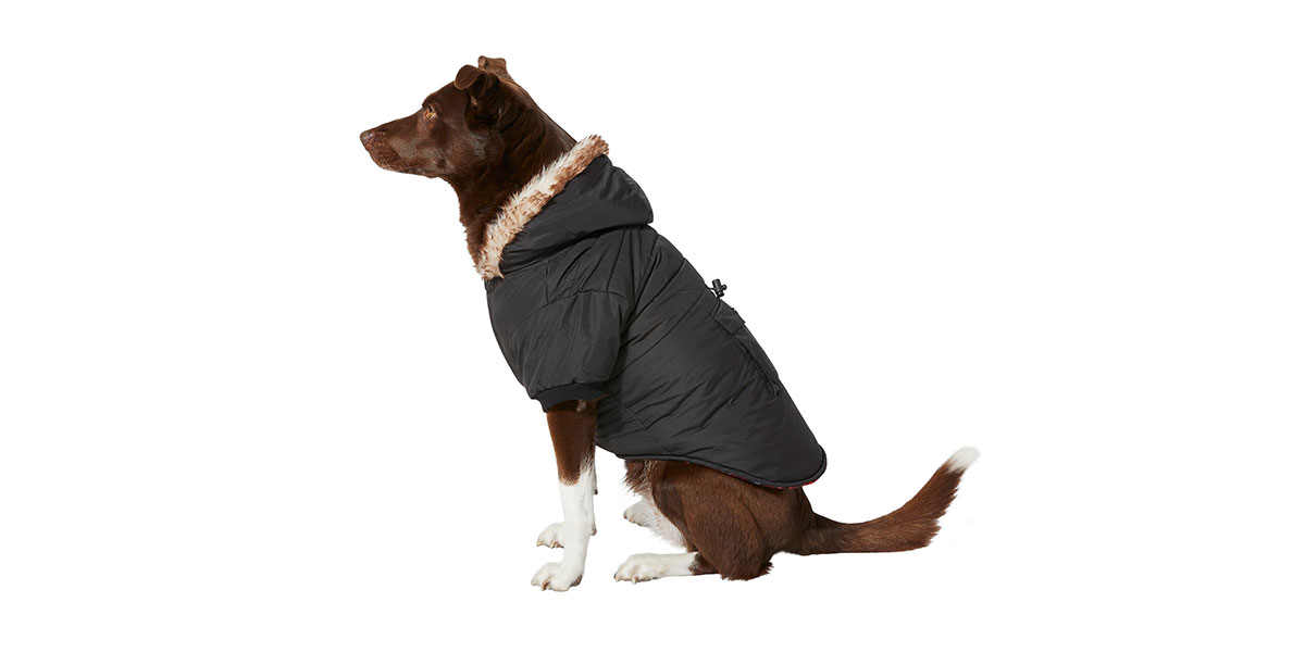 fashion for dogs - cinch coat