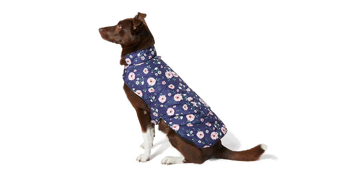 fashion for dogs - floral coat