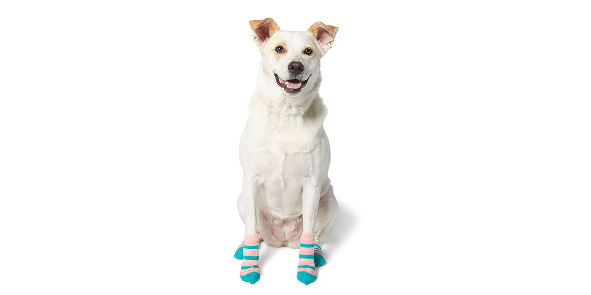 fashion for dogs - socks