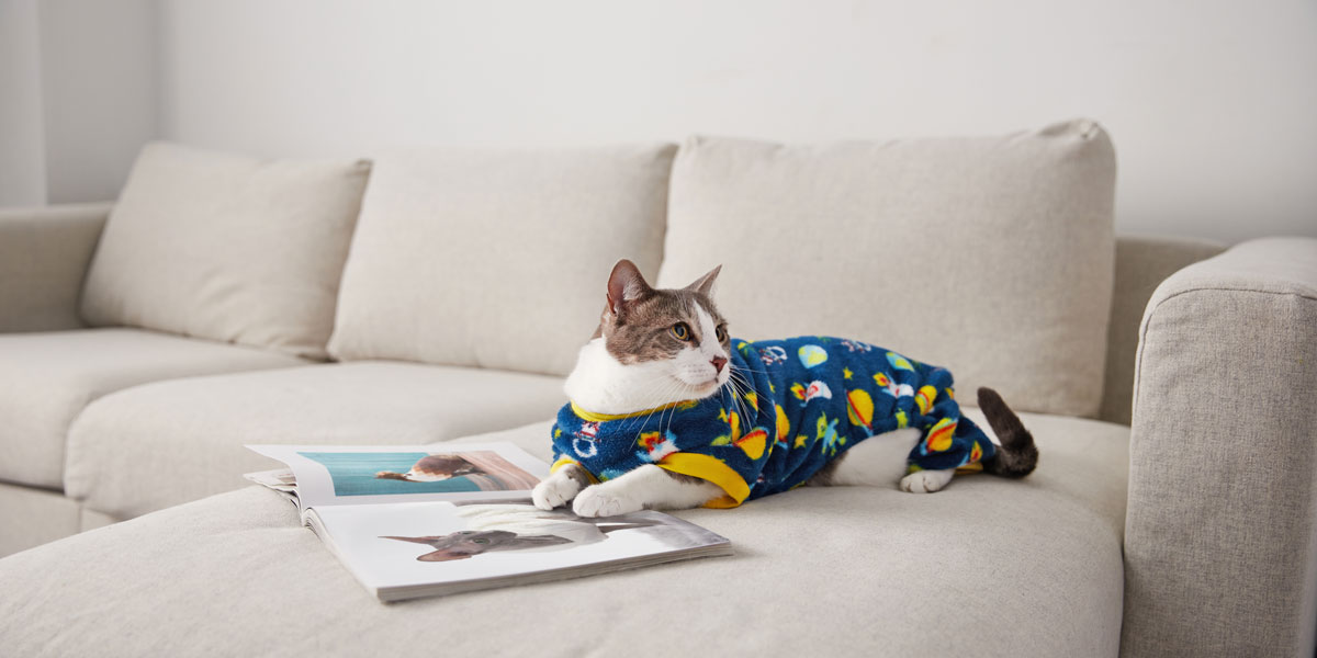 fashion for dogs and cats - pajamas