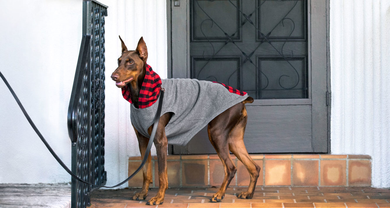 fall fashion for dogs and cats - cute sweaters and coats
