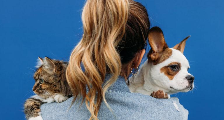 what pet should I get quiz