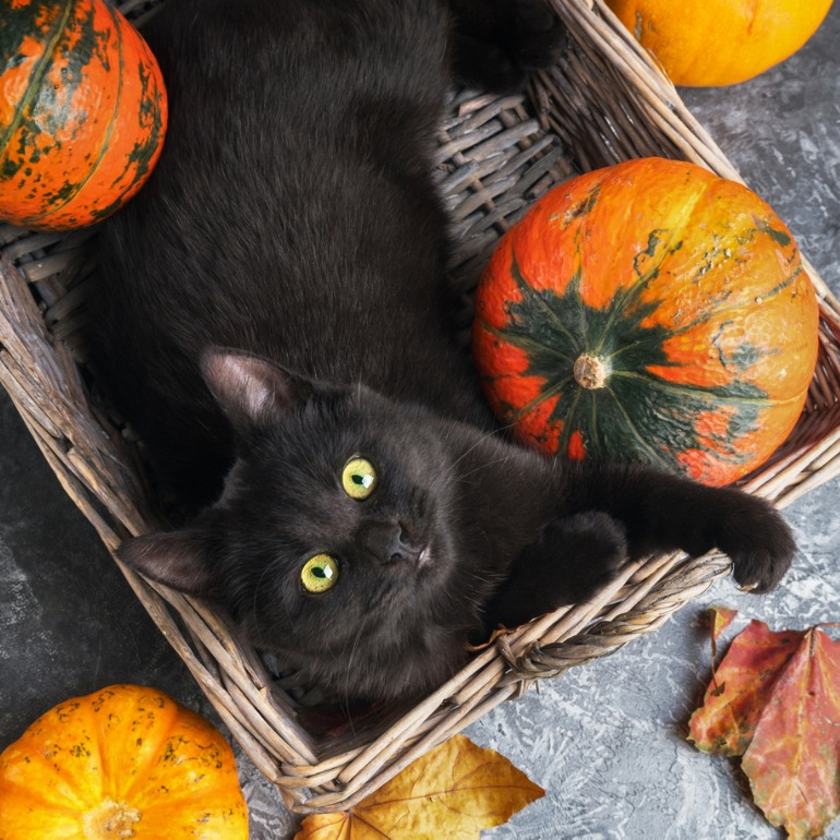 DIY pumpkin treats for cats