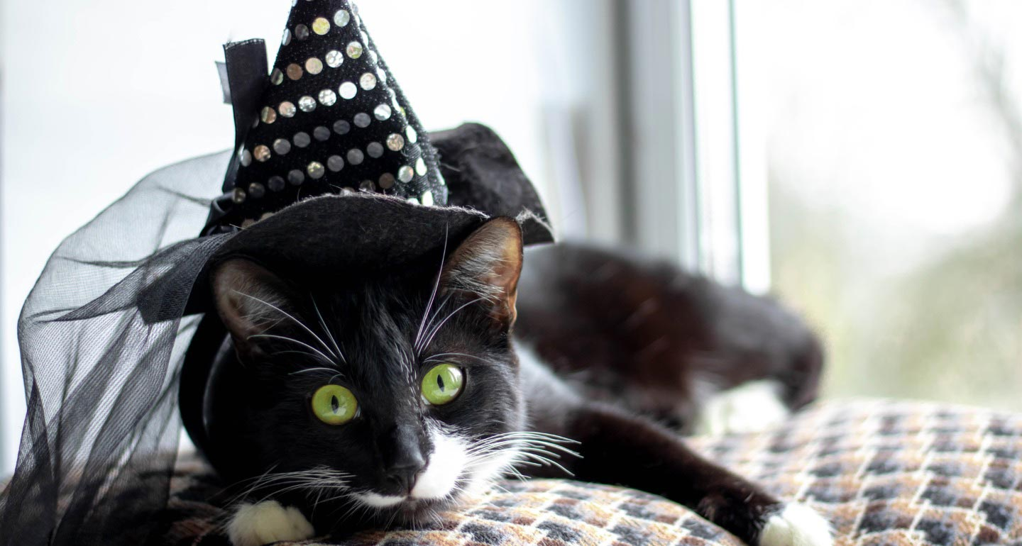 pet halloween safety tips