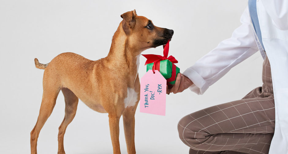 thank you gift ideas - gifts for veterinarians and other VIPPs