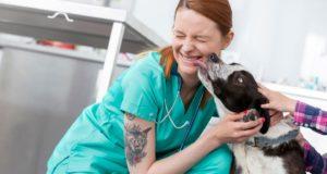 Fear free veterinary