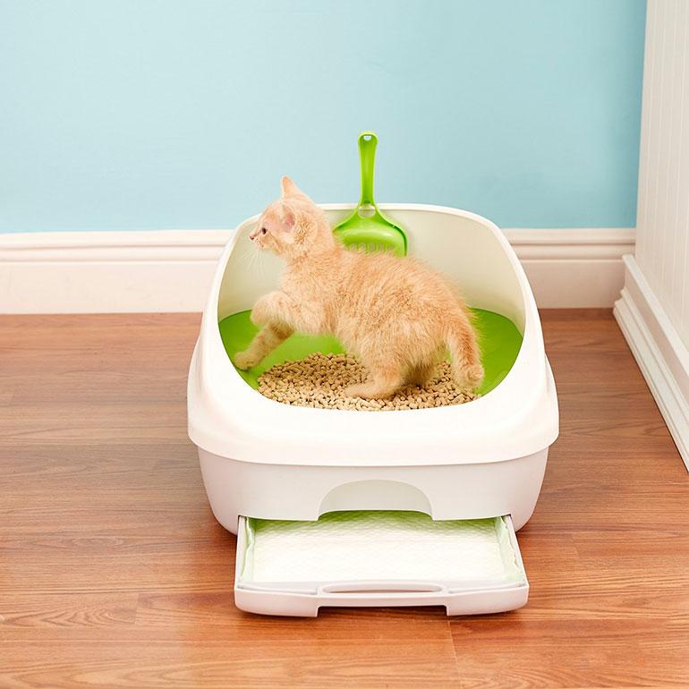best cat litter box - tidy cat litter pan
