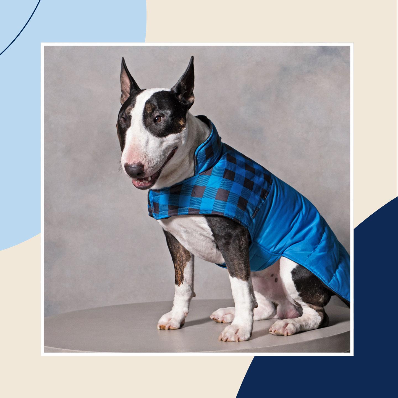 dog winter clothes - coats