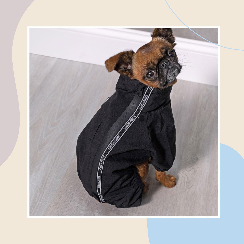 dog winter clothes - snowsuits